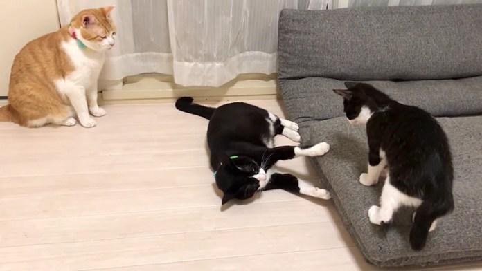 遊ぶ猫達と見る猫