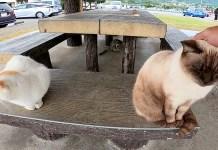 ベンチに座る猫達