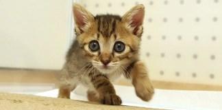 進撃の子猫