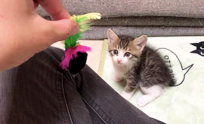 オモチャと子猫