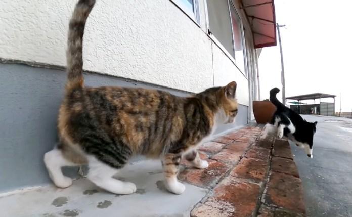 嫉妬深い猫