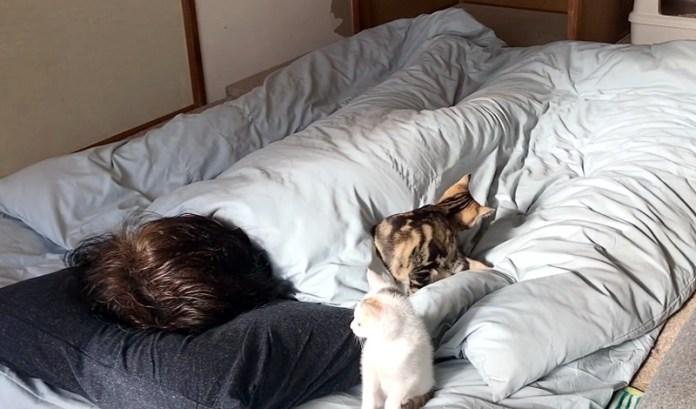 布団の上の子猫達