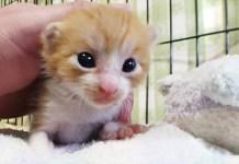 フミフミゴロゴロする子猫