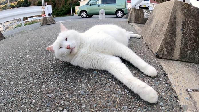 くつろぐ白猫