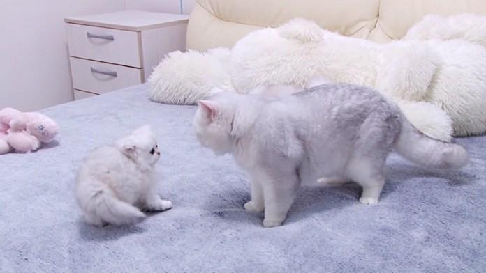 お父さん猫と子猫