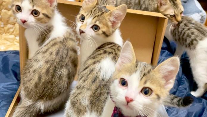 パソコンに集まる子猫達