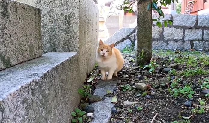 恥ずかしがり屋の猫