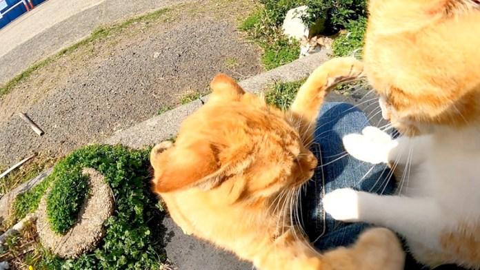 膝の上でケンカする猫達