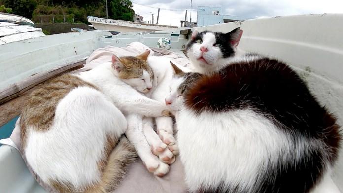 船の上で眠る猫達
