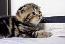 ミルクに遅れた子猫