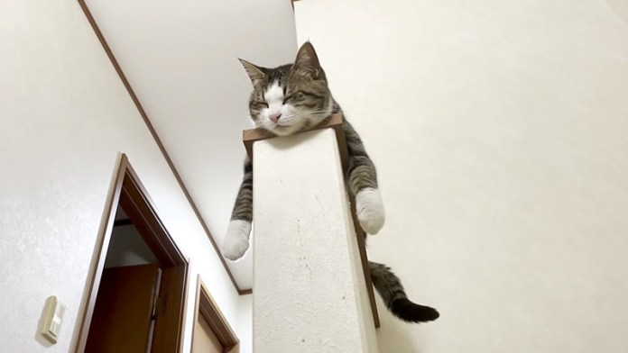 音に合わせ猫