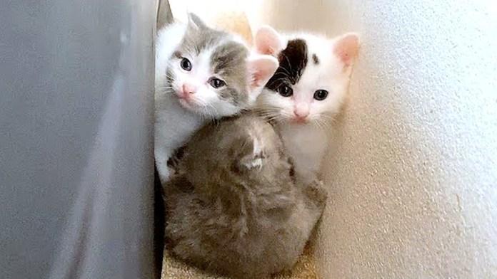隙間にすし詰め状態の子猫達