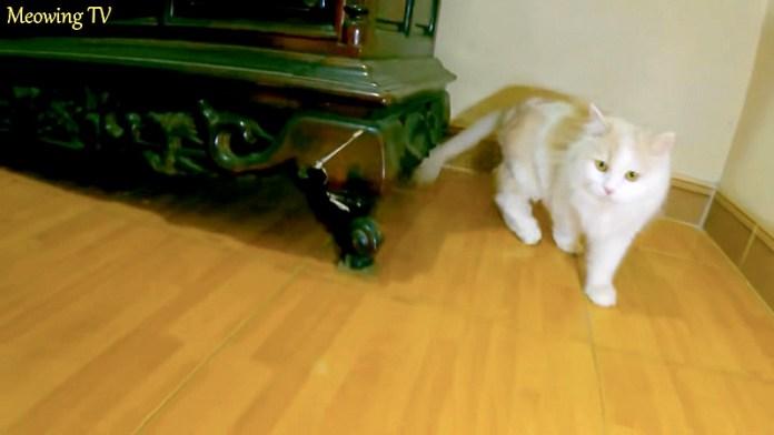 食器棚と猫