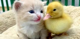 ヒナと子猫