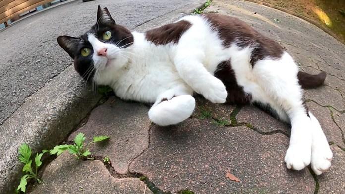 うらめしポーズの猫