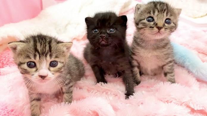 ミルク待ちをする子猫達