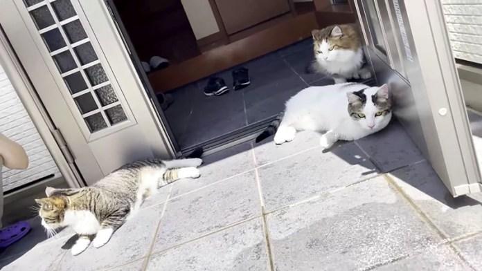 水攻めされる猫達