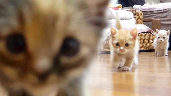 向かってくる子猫達