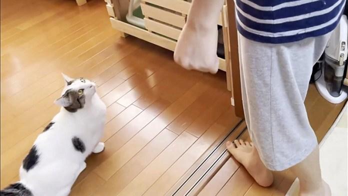 男の子にご飯を催促する猫さん