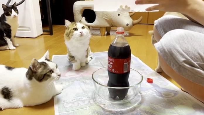 コーラと猫達