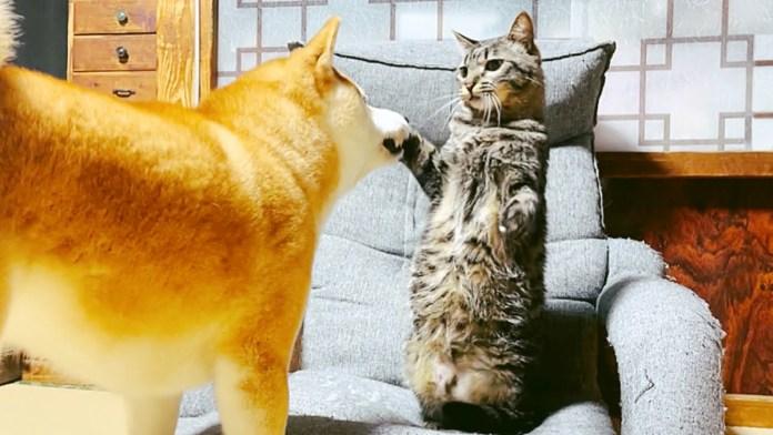 怒られた猫