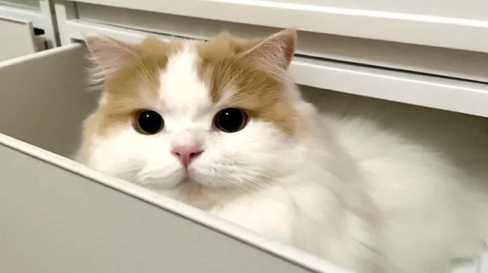 引き出し猫