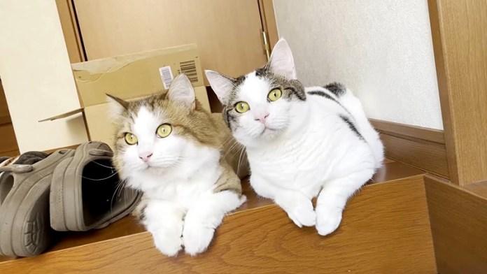 監視する猫達