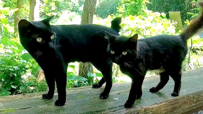 神社の猫達