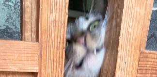 引き戸の隙間の猫