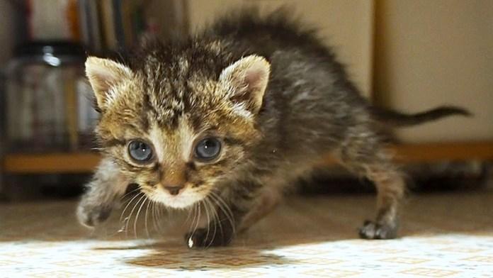 毛を逆立てる子猫