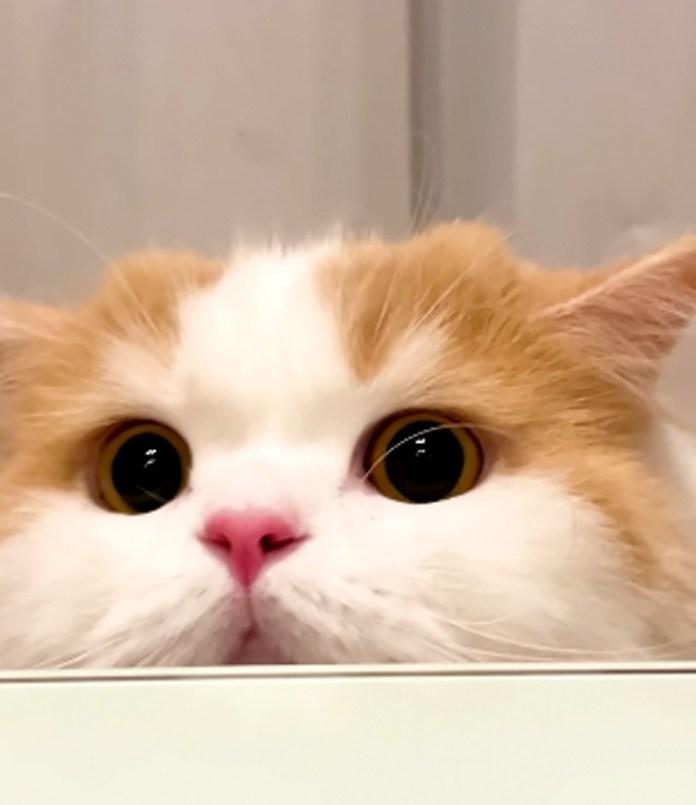 見てしまった猫さん