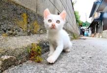 路地裏の白猫子猫