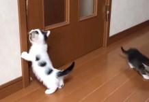 開けて欲しい子猫