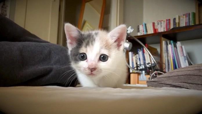 じわじわ近づいてくる子猫