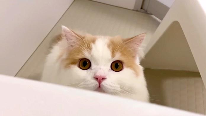 文句を言いにきた猫