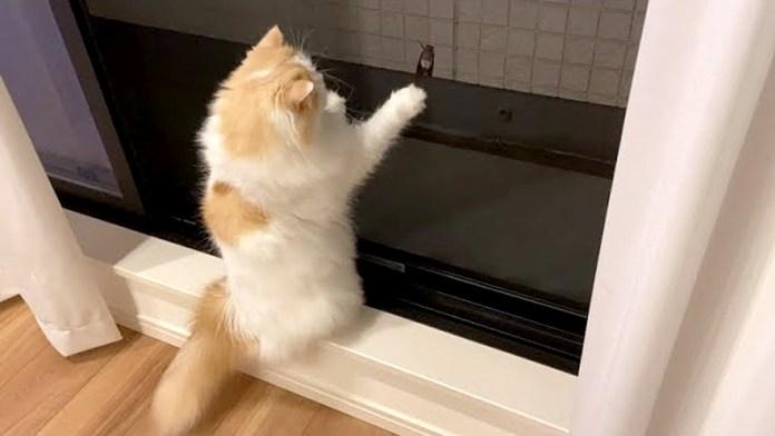 セミが気になる猫
