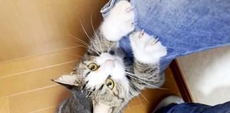 抱っこされたい猫