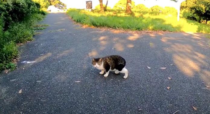 逃げ出した猫
