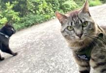 散歩デビューした猫