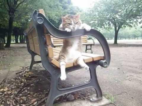 0 - ベンチに腰を掛ける猫(動画)