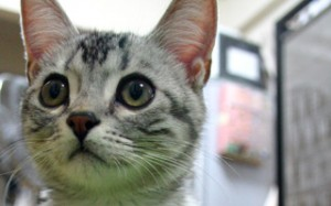 tumblr kpa97rUPug1qzqbkqo1 400 - 猫ジャーナルとは