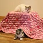 猫専用のコンパクト炬燵