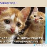 猫の里親募集団体紹介:「ライフボート」