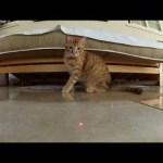 猫×GoPro×レーザーポインタの相性の良さは異常(動画)