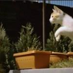 躍動感あふるる子猫のスローモーション(動画)