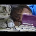 アメショのコテツ君によるメールチェック(動画)