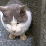 江ノ島で「遠隔操作ウイルス事件」犯人と接触した猫が見つかる