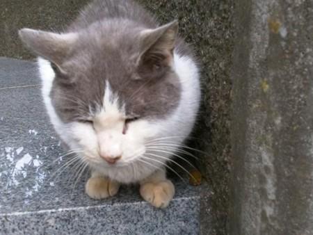 130106catyutaka - 江ノ島で「遠隔操作ウイルス事件」犯人と接触した猫が見つかる