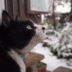 猫と雪の写真と動画のまとめ