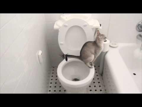 130127toilet - ビューティフル!水洗トイレを使いこなす猫達の動画